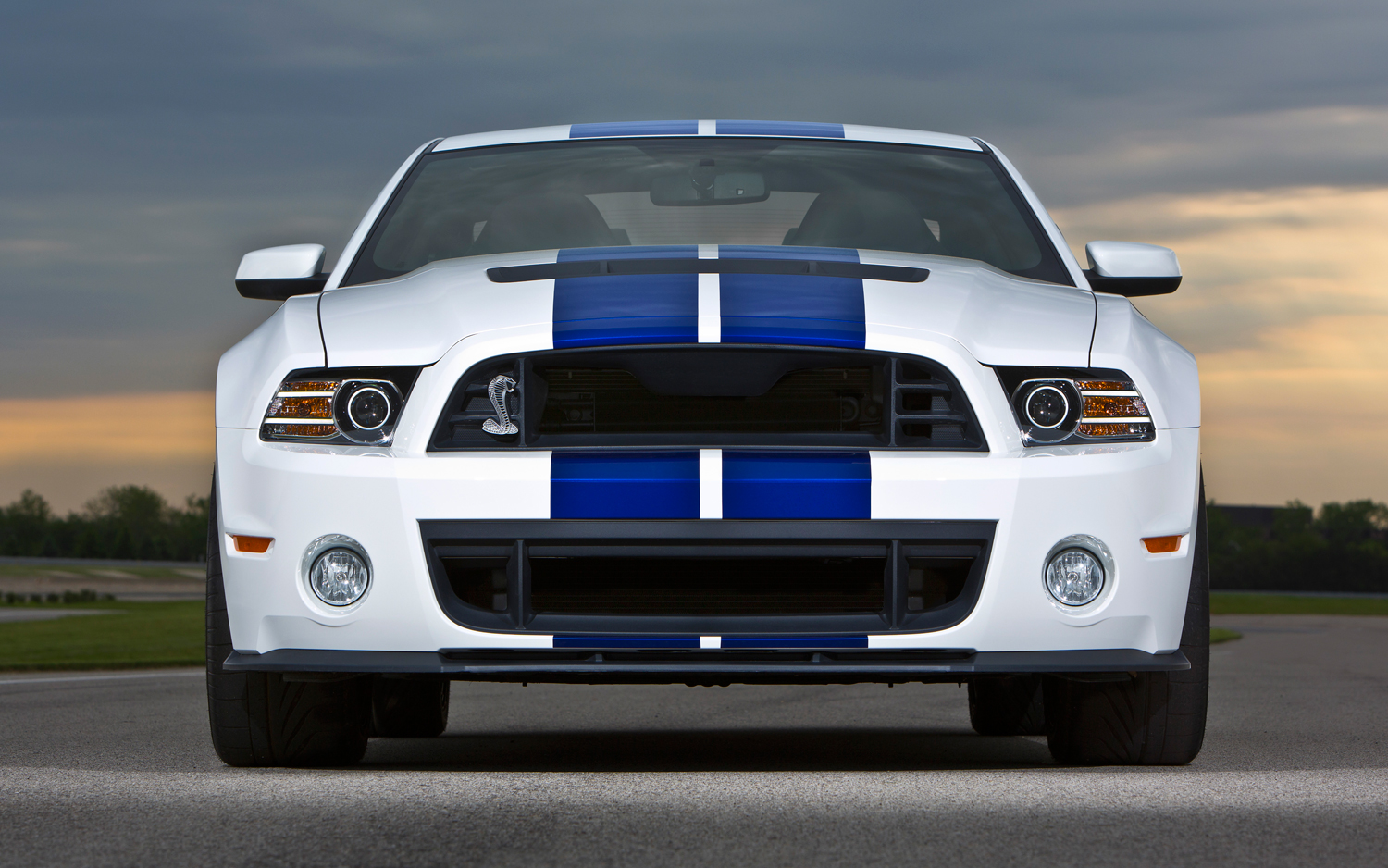 ford shelby #1