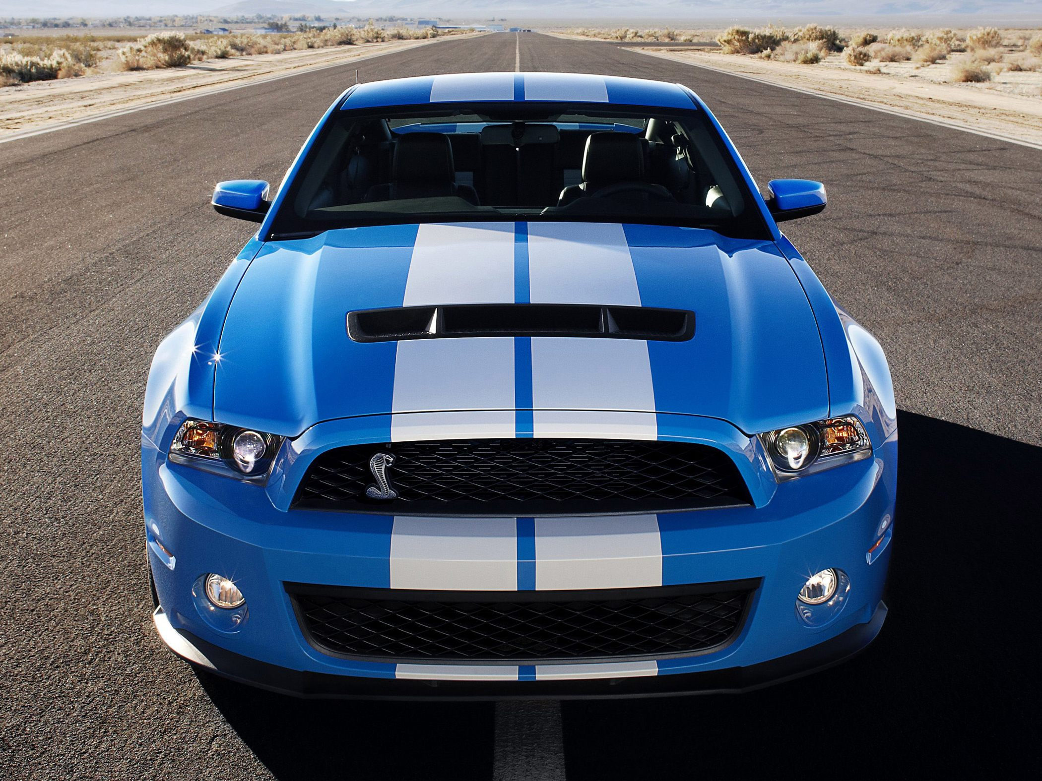 Pictures of ford shelby #11